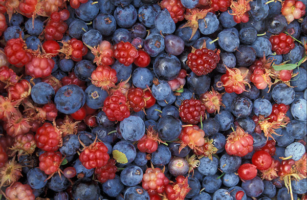 Alaska Wild Berries