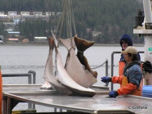 Court Orders Review of A Controversial Fisheries Observer Program