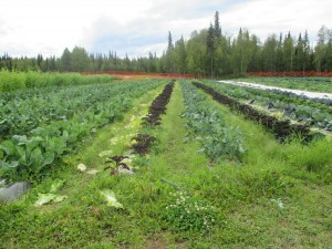 A Susitna Valley Farm Sells Its Produce Close to Home
