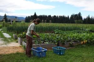AK: Farming off the Grid.