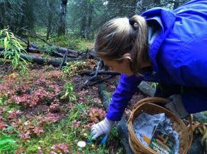 First-Time Forager's Hunt For Mushrooms In Alaska's Urban Wilderness