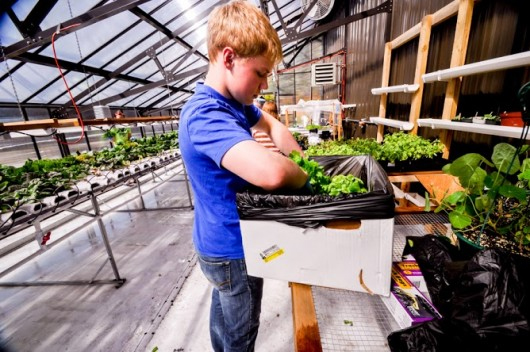 A students works in the Thorne Bay greenhouse. (Courtesy Megan Fitzpatrick)