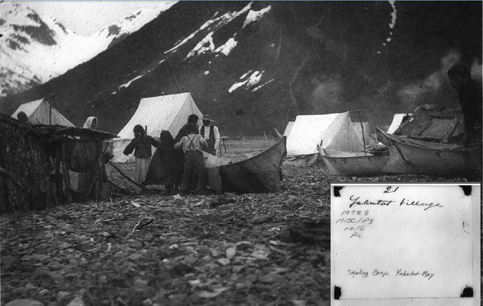 C. Hart Merriam photo album at the Bancroft Library, Berkeley, photograph of Yakutat sealing camp in 1899. Photo courtesy Aron Crowell, Anchorage Museum.