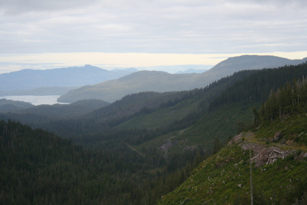 Clear-cuts and old-growth forests are part of the view of Indian Valley on Prince of Wales Island. The Forest Service just announced three more timber sales in the Island's Big Thorne area. (Creative Commons photo by Nick Bonzey)