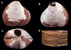 Arctic Expedition Uncovers Previously Undiscovered, Ancient Mollusk Specimens