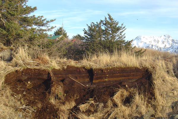 A peat exposure near the village of Nanwalek that holds evidence of many volcanic eruptions and a few tsunamis. (Photo by Zebulon Maharrey)