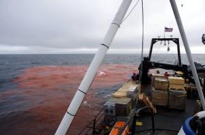 Dye release off the stern of the Norseman II. (Photo via ART Lab/UAF)