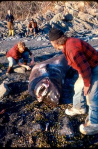 (Photo courtesy Bruce Wright, Aleutian Pribilof Islands Association)