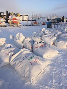 Mushers Hand Off Their Drop Bags In Anticipation Of 2015 Yukon Quest
