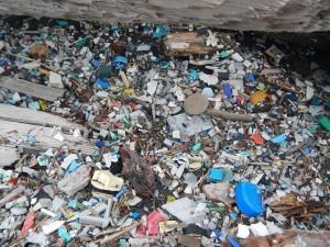 Crushed plastic debris on beach at Patton Bay, Montague Island. (Photo courtesy Chris Pallister)