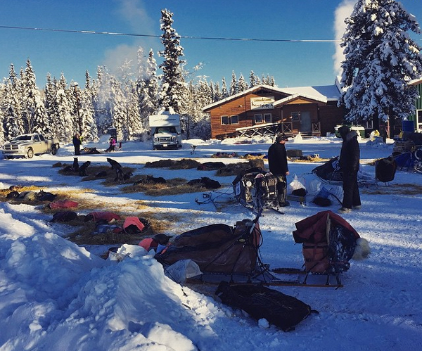 Sled dogs take a rest in the dog yard at Pelly Crossing. (Photo by Emily Schwing, KUAC - Fairbanks)