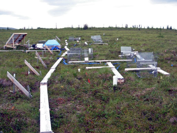Several research sites are scattered around the Stampede, including this one that monitors the changes in the area's permafrost. (Credit Friends of the Stampede)