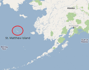 St. Matthew Island sits just north of the 60th Parallel. Like Sitka's St. Lazaria, St. Matthew is part of the Alaska Maritime National Wildlife Refuge system.