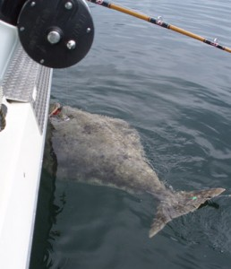 Commission Recommends Boost In Coast-Wide Halibut Catch