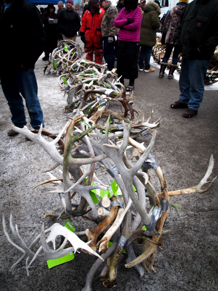 Lots of 10 antlers fetched as much as $750. Size, quality, and variety in how long ago the animal was harvested all played a role in bidding. (Photo: Zachariah Hughes, KSKA)