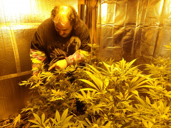 "Dean ""Bear"" Lari grows six marijuana plants."