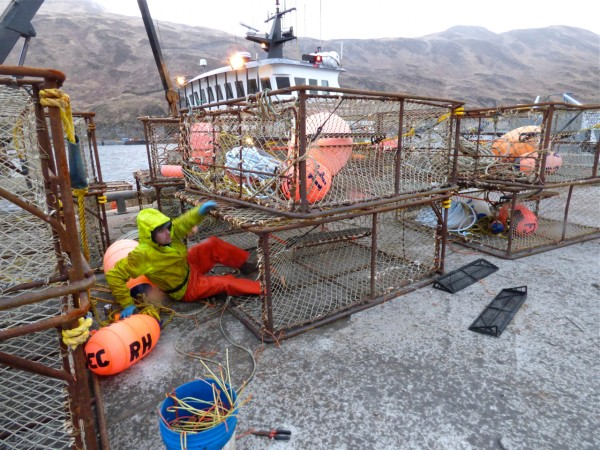 Ryan Fry sets up crab pots outside the F/V Farrar Sea in Unalaska earlier this month. (Annie Ropeik/KUCB)
