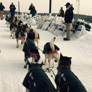 Iditarod Front-Runners Headed For White Mountain