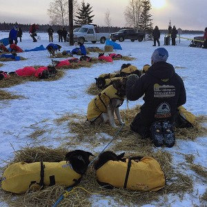 Brent Sass takes a moment with his dogs. The Eureka musher was disqualified from the 2015 Iditarod Tuesday night. (Photo by Emily Schwing)