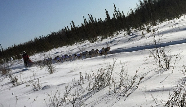 Aily Zirkle's team en route to Tanana on Tuesday. (Photo by Emily Schwing)