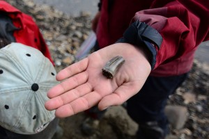 1024px-Carnivorous_dinosaur_tooth_from_the_Colville_River_bluffs._North_Slope,_Alaska