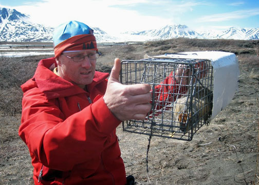 Cory Williams of UAA Dept of Biological Scientists researches the lives of arctic squirrels. (Photo: Courtesy of Frontier Scientists)