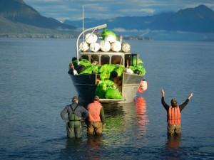 Photo courtesy Gulf of Alaska Keeper (www.goak.org)