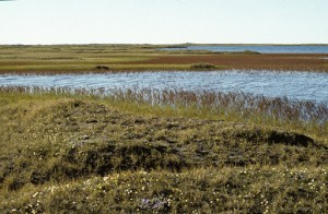Pond on ANWR coastal plain. (Photo: USFWS)