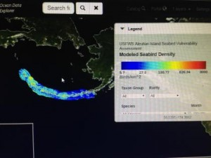 Seabird Density Mapping Tool - Photo by Shady Grove Oliver/KBBI