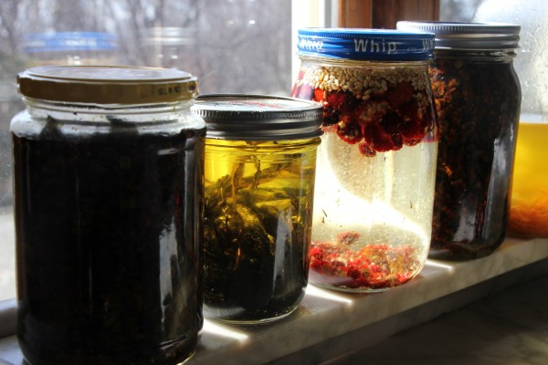 Local plant bits are left to solar infuse in oil for several weeks: (from left) cottonwood blossoms, chythlook (wormwood), rose hips, cottonwood blossoms, carrot. (Photo by Hannah Colton, KDLG – Dillingham)