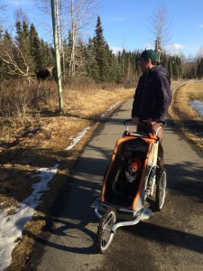 Moose sighting along the Chester Creek Trail. Photo by Monica Gokey.