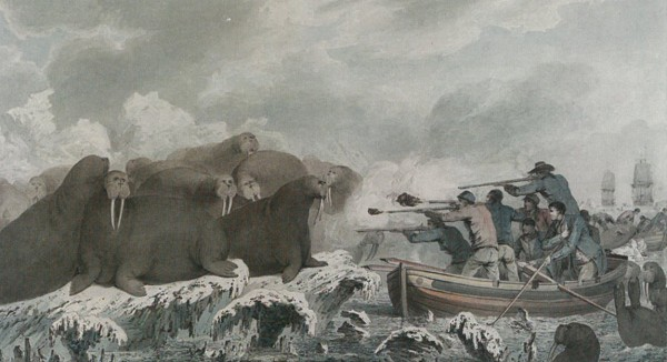 John Webber's Sea Horses, c 1781-83