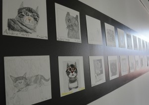 Some of Hogg's many drawings of cats on display in the gallery. Photo courtesy of Sparc!