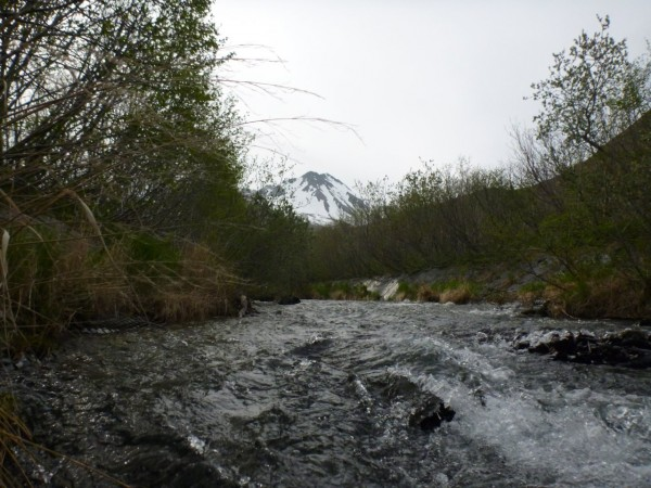 Packer Creek flows down a steep slope at the site of the hydro project. Credit Dave Bendinger/KDLG