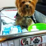 Jillie in PAWS cart