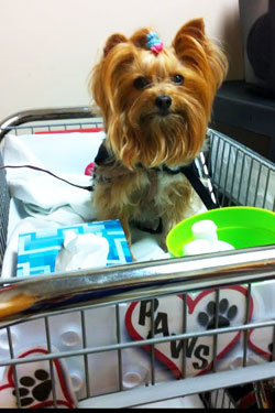 Jillie in PAWS cart