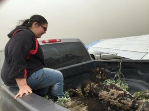 Apprentice Lillionna Kosbruk, 16, sits with a reindeer as it is transported to the pen. Photo taken July 6. Photo: Native Village of Port Heiden.
