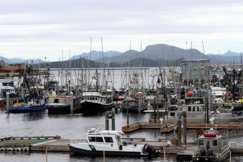 A forest of trolling poles in Sitka's ANB harbor, July 2015. (Photo by Rachel Waldholz/KCAW)