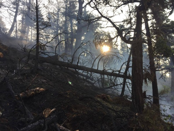 The photo shows a burned area in the Stetson Creek Fire in the Chugach National Forest near Cooper Landing on the Kenai Peninsula, which is now 100 percent contained. Photo: Alaska Division of Forestry.