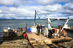 Kotzebue Fishery Closes Early with '3rd Best Harvest in Over 25 Years'