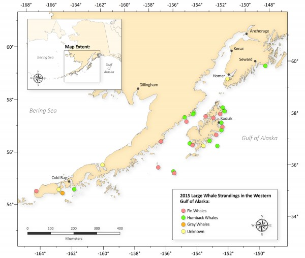 NOAA Fisheries is declaring the recent deaths of 30 large whales in the Gulf of Alaska an unusual mortality event, triggering a focused, expert investigation into the cause. Graph: NOAA.