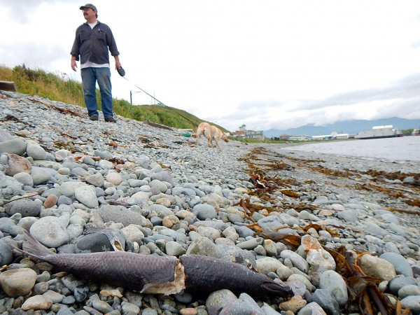 Caleb Livingston takes his dog Hazel for a walk on Unalaska's Front Beach. KUCB/John Ryan photo.