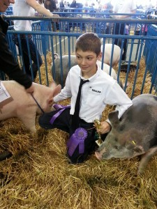 Lively bidding at the Alaska State Fair 4-H livestock auction