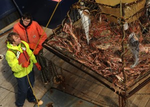 Night shift deckhand David Martindell and biologist Ryan Mong on the US Fish and Wildlife Service research boat M/V Tiglax pull in a substance crab pot with Tanner Crab in the Kuluk Bay area of Adak Island in the Aleutian, in western Alaska, on Sunday, May 31, 2015. (Bob Hallinen / Alaska Dispatch News)