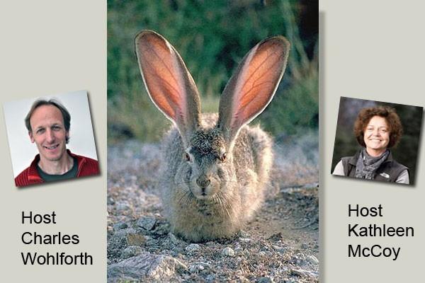 Rabbit image courtesy Wikimedia Commons.