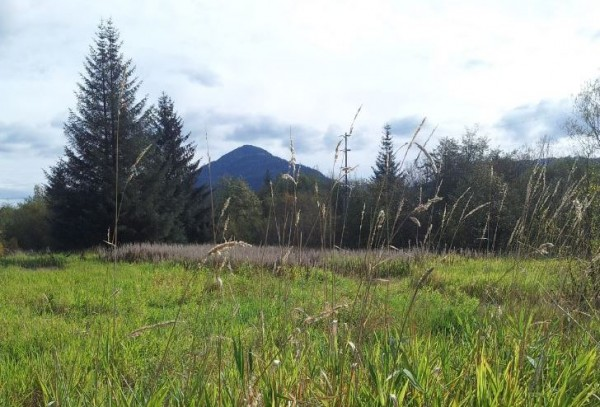 Juneau's St. Vincent de Paul Society and Seattle-based GMD Development were supposed to break ground on low-income senior housing on this land near the airport. With the partnership over, the land remains untouched. (Photo courtesy St. Vincent de Paul Society)