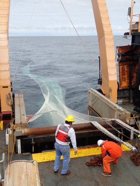 Deploying the fishing net (Alex Andrews/NOAA/ABL)
