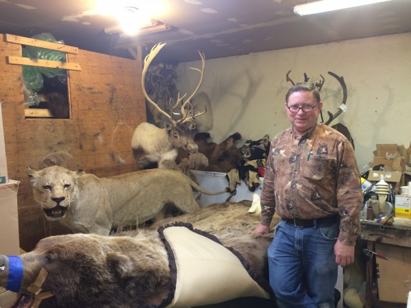 Larry Golden has been a taxidermist since he sent of for a $10 how-to kit when he was 10. Photo: Monica Gokey/KSKA.