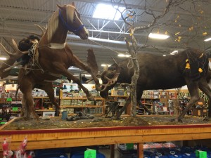 AK: Palmer taxidermist devotes a lifetime to still life