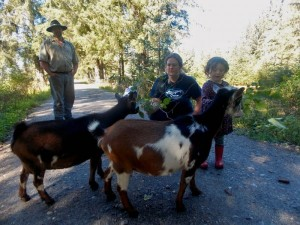 AK: Southeast dairy goat business presents unique challenges